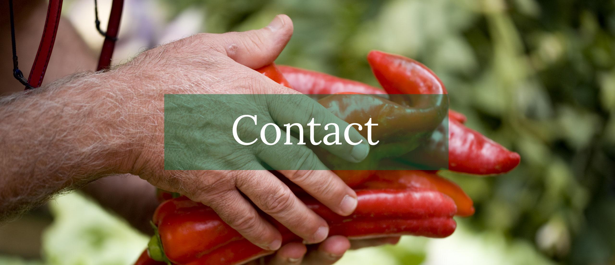 Contatta Lo Casto Srl per il tuo commercio di ortrofrutta